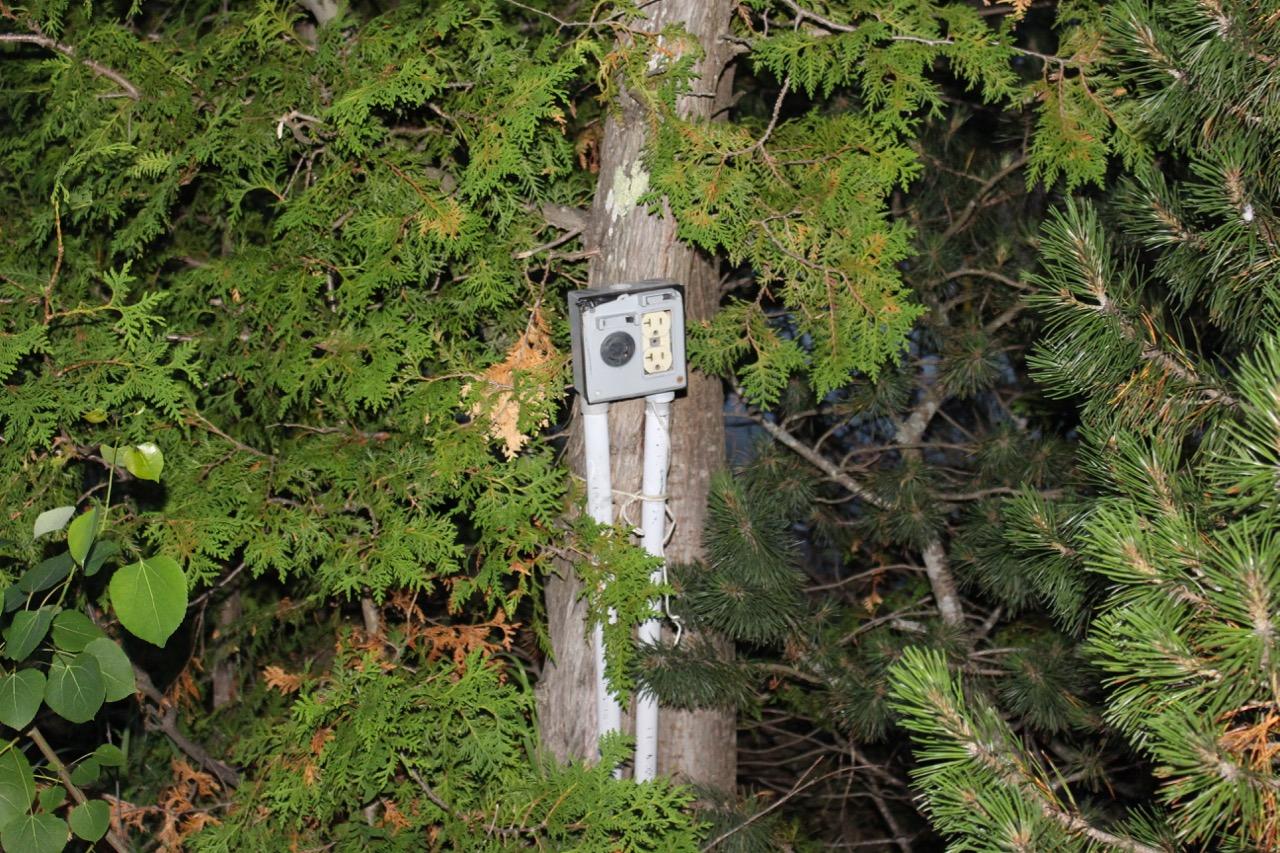 Plug on tree